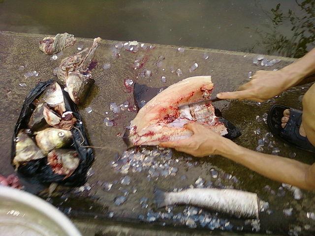 Cá nướng Thái Xuyên Thái Thụy Thái Bình